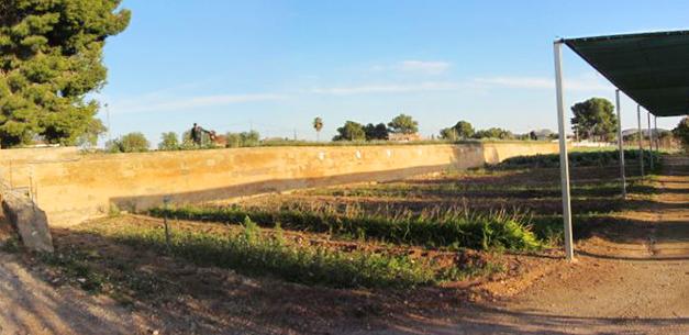 campos en las instalaciones de nuestro campamento de verano en valencia